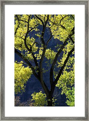 Usa, Utah, Zion National Park, Grotto Framed Print by Jaynes Gallery