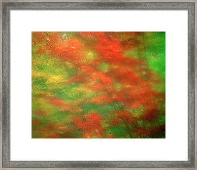 Usa, Vermont Abstract Of Maple Trees Framed Print by Jaynes Gallery