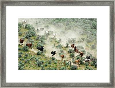 Usa, Washington, Malaga, Running Horses Framed Print by Jaynes Gallery