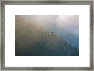 Usa, Washington, Maple Grove Framed Print by Jaynes Gallery