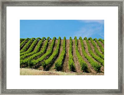 Usa, Washington, Rolling Vineyards Framed Print