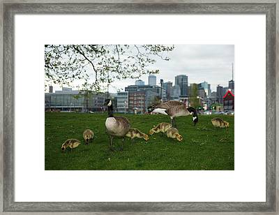 Usa, Washington, Seattle, South Lake Framed Print by Rick A Brown