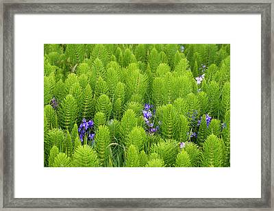 Usa, Washington State, Horsetail Framed Print by Trish Drury