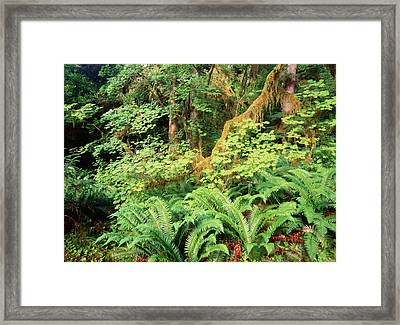Usa, Washington State, Olympic Framed Print