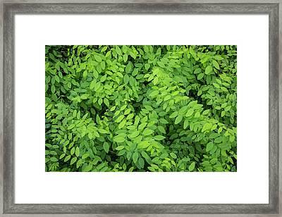 Usa, Washington State, San Juan Islands Framed Print by Jaynes Gallery