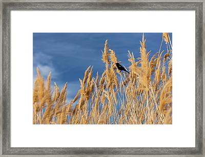 Usa, Washington State, Walla Walla Framed Print