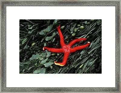 Usa, Washington, Tongue Point Framed Print by Jaynes Gallery