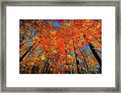 Usa, West Lafayette, Indiana, Trees Framed Print