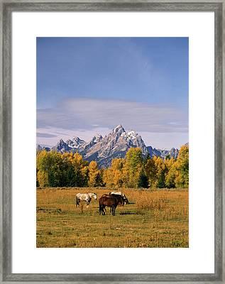 Usa, Wyoming, Horses In Grand Teton Framed Print by Stuart Westmorland