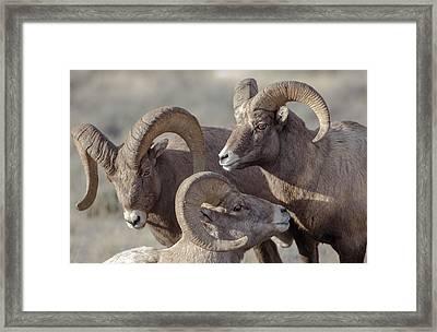Usa, Wyoming, Jackson, National Elk Framed Print