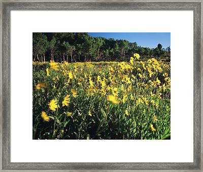 Usa, Wyoming, Sierra Madre, View Framed Print by Scott T. Smith
