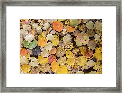 Usa, Wyoming, Sublette County, Autumn Framed Print