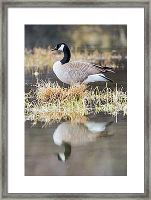 Usa, Wyoming, Sublette County, Canada Framed Print by Elizabeth Boehm