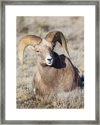 Usa, Wyoming, Teton County, National Framed Print