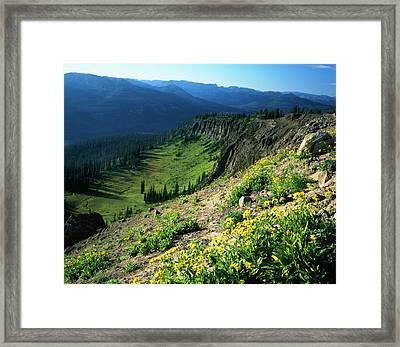 Usa, Wyoming, Wildflowers Framed Print
