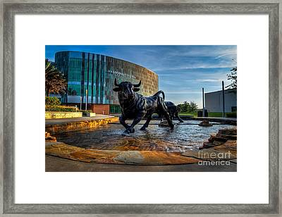 Usf Bulls Fountain Framed Print