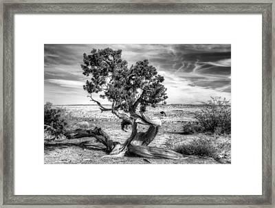 Utah Desert Survivor Framed Print by Geraldine Alexander