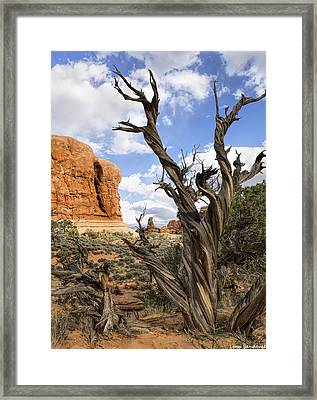 Utah Juniper Framed Print