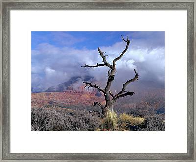 Utah Usa Pinyon Pine Snag Above Virgin Framed Print