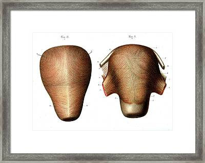 Uterus Muscle Structure Framed Print by Collection Abecasis