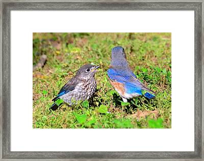 A Mothers Care Framed Print by David Lee Thompson