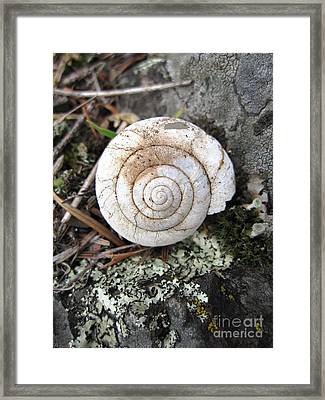 Framed Print featuring the photograph Vacant Shell by Devin  Cogger