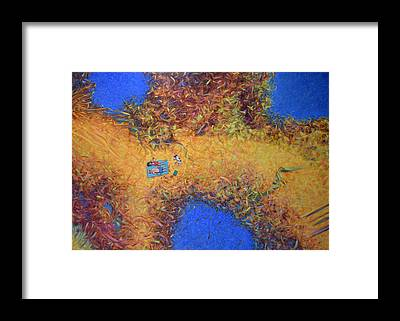 Sandbar Framed Prints