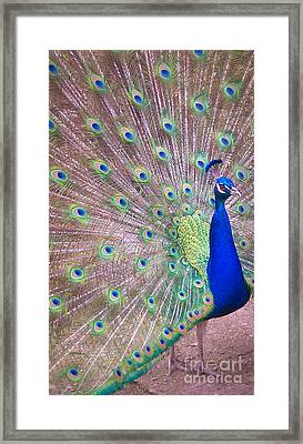Vain Framed Print by Charlie Cliques