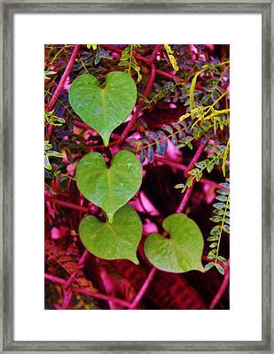 Valentine Au Natural Framed Print