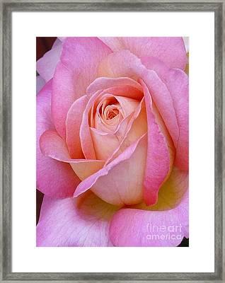 Valentine Pink Rose Bud Framed Print