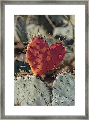 Valentine Prickly Pear Cactus Framed Print