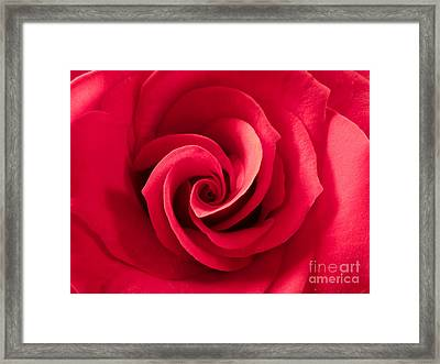 Valentine Red Rose Framed Print by Jose Elias - Sofia Pereira