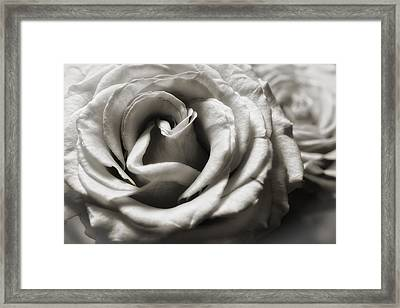 Valentine Rose Framed Print