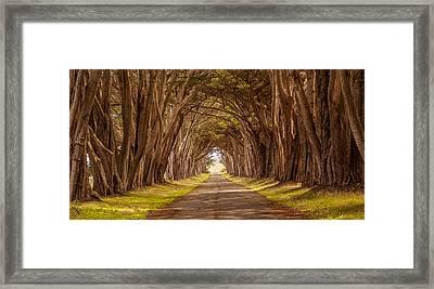 Valiant Trees Framed Print