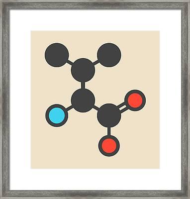 Valine Amino Acid Molecule Framed Print by Molekuul