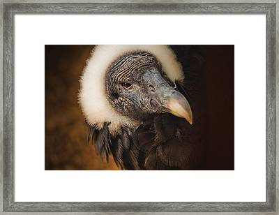 Vallerie Framed Print by David Davies