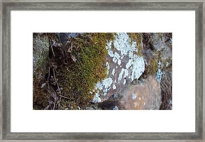 Valley Green 6 Framed Print by Cynthia Harvey
