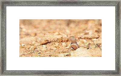 Valley Lizard Framed Print