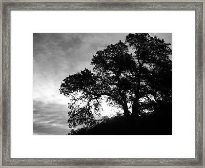 Valley Oak Framed Print by Jennifer Muller