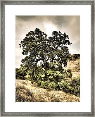 Valley Oak Framed Print