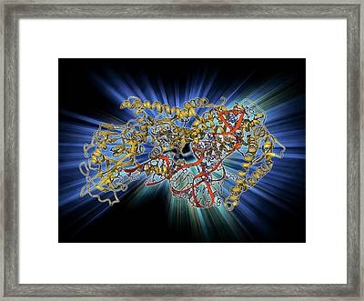 Valyl-trna Synthetase Molecule Framed Print by Laguna Design