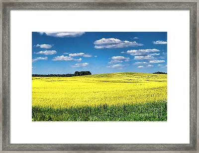 Van Gogh Would Have A Field Day Framed Print