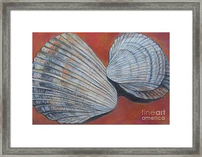 Van Hyning's Cockle Shells Framed Print by Cathy Lindsey