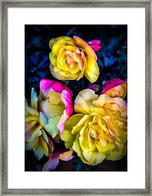 Vancouver Island Roses Framed Print