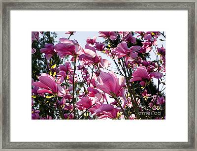 Vancouver Spring Time 5 Framed Print by Terry Elniski