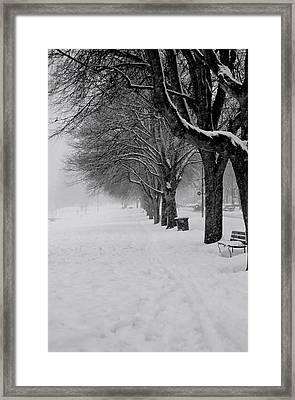 Vancouver Winter Trees Framed Print