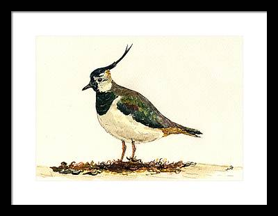 Lapwing Framed Prints