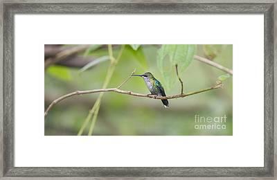 Vanishing In Nature.. Framed Print