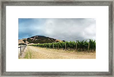 Vanishing Point Vine Framed Print by Stan Angel