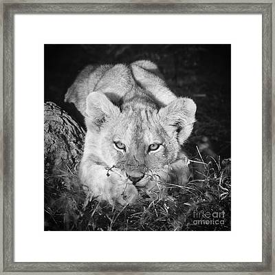Vanishing Species 2 Framed Print by Chris Scroggins